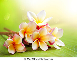tropical,  frangipani,  Plumeria, flor, balneario
