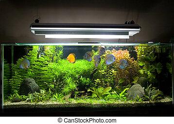 Tropical Freshwater Aquarium with Discus Fish 1 - A...