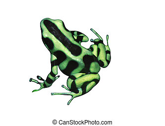 Tropical frog - Beautiful tropical frog Dendrobates auratus...