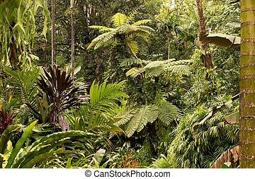 Tropical Garden - Botanic Garden, Queensland, Australia