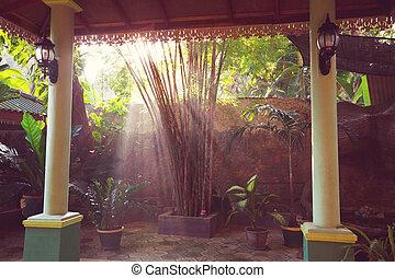Tropical garden