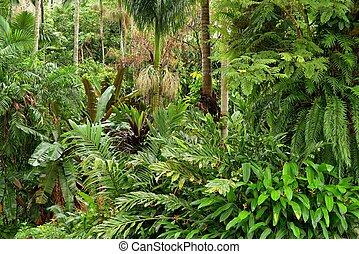 Tropical Garden - tropical garden in North Queensland, ...