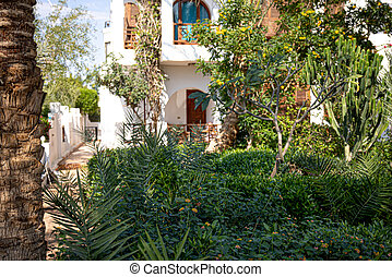 Tropical garden with many plants in the backyard in Egypt.