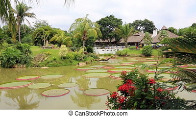 Tropical garden with pond