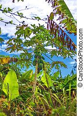 Tropical garden with