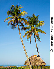 Tropical Getaway - Two tall palm trees rise above a thatched...