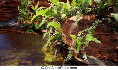 tropical golden pond with rocks and green plants