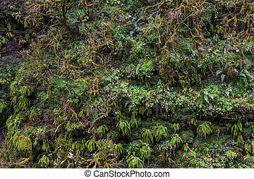 Tropical green foliage background.