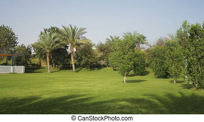 tropical green lawn with palm trees