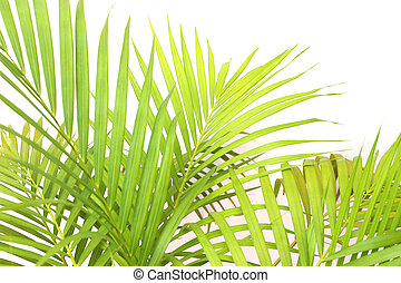 tropical green palm leaf tree on white wall background