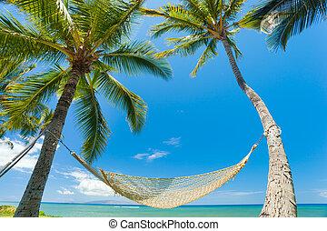 tropical, hamaca, árboles de palma