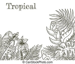 tropical hand drawn vector illustration