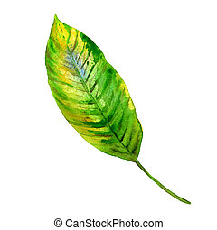 Tropical Hawaii leaves palm tree in a watercolor style...