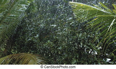 tropical heavy rain in asian rainforest
