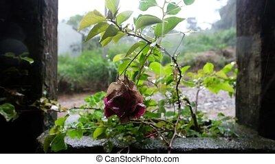 tropical heavy rain in asian rainforest. Water falling on...