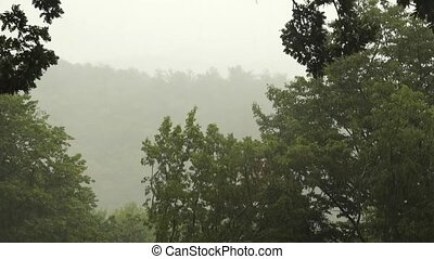 Tropical heavy rain with oak forest background. Include the original sound.