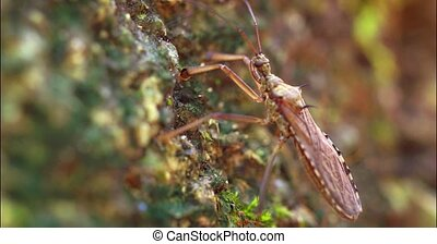 Tropical Heteroptera. Macro video with shallow depth of ...