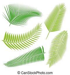 tropical, hojas, colección, aislar, vector.