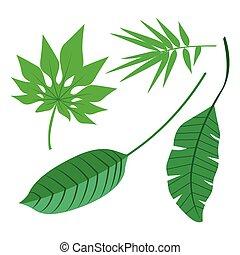 tropical, hojas, colección, aislar, vector., conjunto