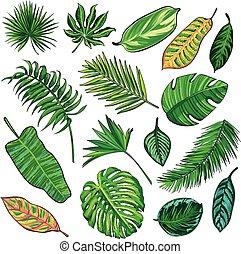 tropical, hojas, colección, aislar, vector.big, conjunto