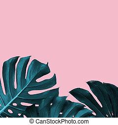 tropical, hojas, de, monstera, en, un, rosa, duotone, plano de fondo