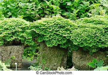 tropical, hojas, jardín, diminuto, helecho