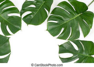 tropical, hojas
