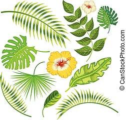 tropical, hojas, y, flores, vector