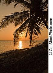 Tropical hot sunset