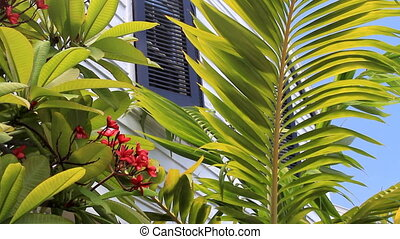 Tropical House in the Florida Keys
