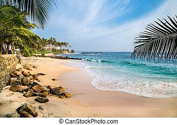 Tropical idylic beach with palms near Weligama, Sri Lanka...