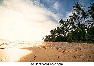 Tropical idylic sunset on beach with palms near Weligama, ...