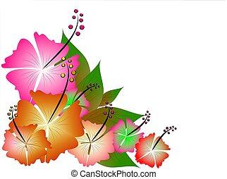 Tropical illustratio - Multi-coloured hibiscus flowers and...