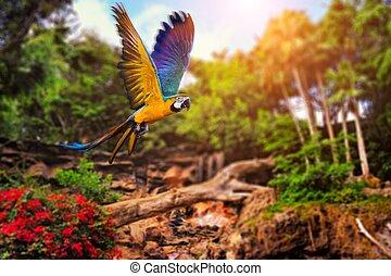 tropical, imagen, plano de fondo