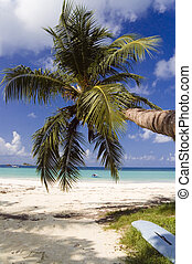 Coconut palm tree hangs out over sandy tropical beach, Cote D'or , Praslin, Seychelles