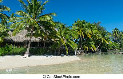tropical island bora bora with sandy beach
