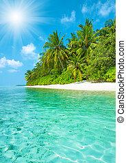 Tropical island sand beach with palm trees and blue sky