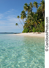 tropical island - sea, sky and palm trees