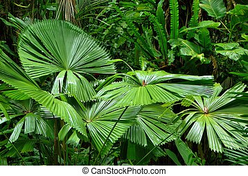 tropical, jardín
