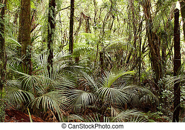 Tropical jungle forest