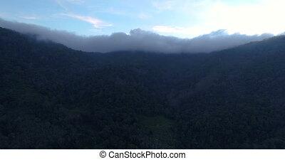 Tropical jungle in the cloud