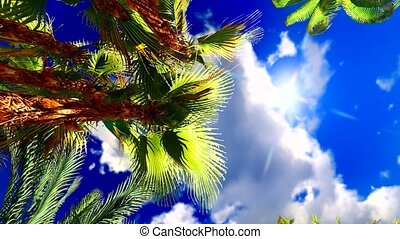 Tropical jungle - Lush exotic vegetation in tropical jungle