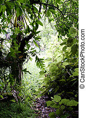 Tropical jungle - Lush foliage in tropical forest