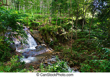 Tropical jungle waterfall in green tropical forest