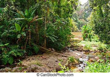 tropical jungles of South East Asia