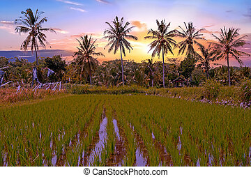 Tropical landscape on Java Indonesia at sunset