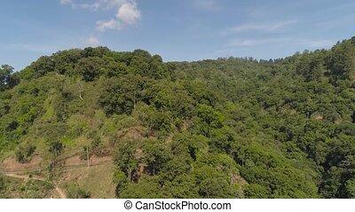 tropical landscape rainforest and mountains - jungle...