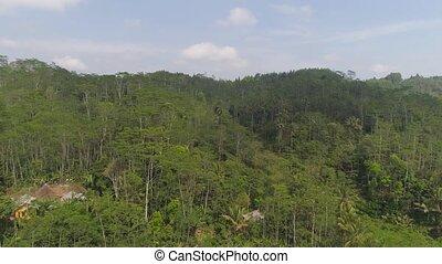 tropical landscape rainforest and mountains - tropical...