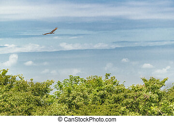 Tropical Landscape Scene, Guayaquil, Ecuador - Bird flying...