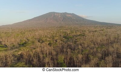 low growing tropical forest at foot mountain at sunset. aerial view mountains, forest with trees tropical landscape, Indonesia. Aerial footage.